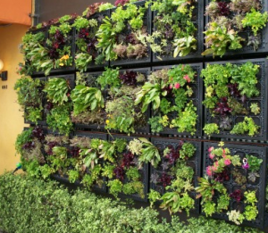 living wall epites
